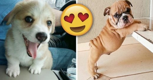 Cover Imágenes de perritos tan lindos que te harán sonreír