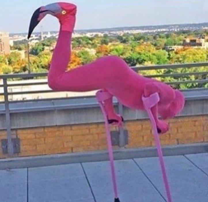 hombre vestido de flamingo