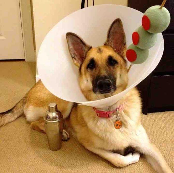 fotos para los que aman a los perritos