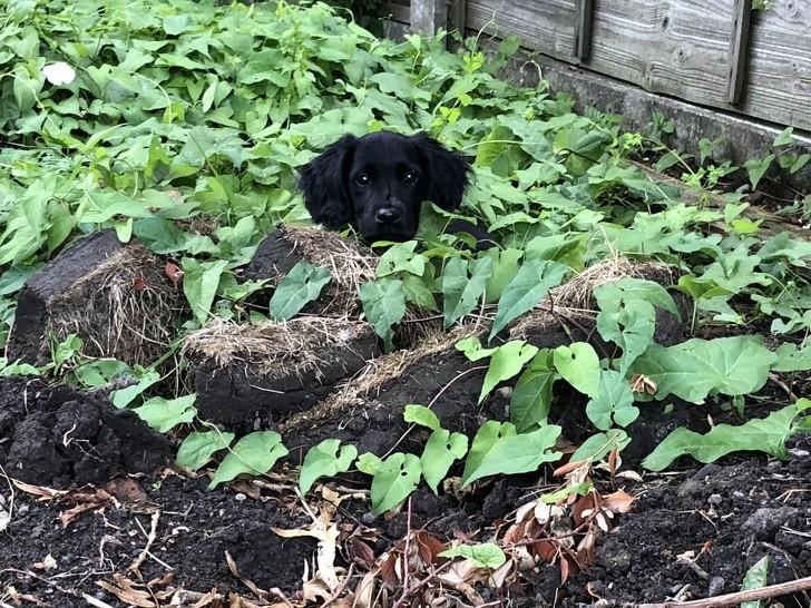 fotos para los que aman los perritos