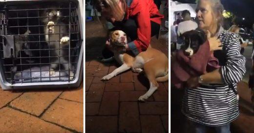 Cover Voluntarios rescatan vida de animales abandonados durante el huracán Florence