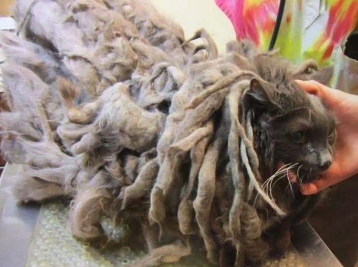 gato envuelto en bola de pelos