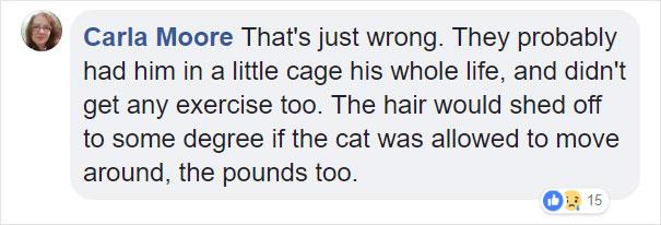 gato envuelto en bola de pelo