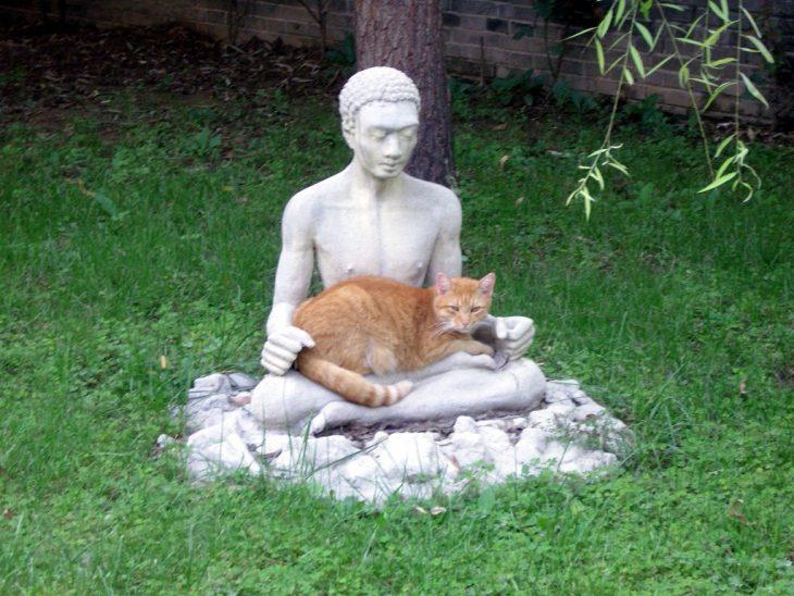gatos adoran las esculturas