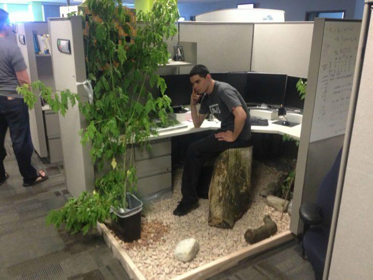 árbol en la oficina