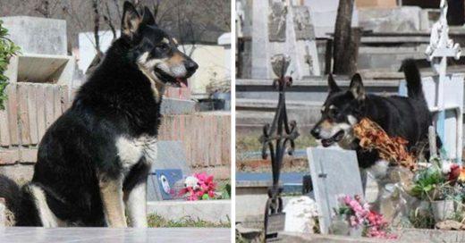 Cover Perro fiel cuidó la tumba de su dueño por 11 años, hasta que murió a su lado