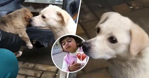 Cover le da un último beso de despedida a su cachorro