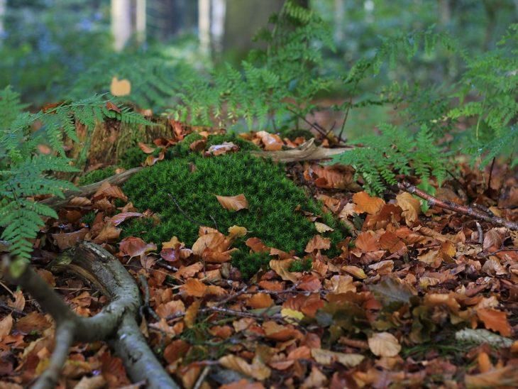 tierra hojas