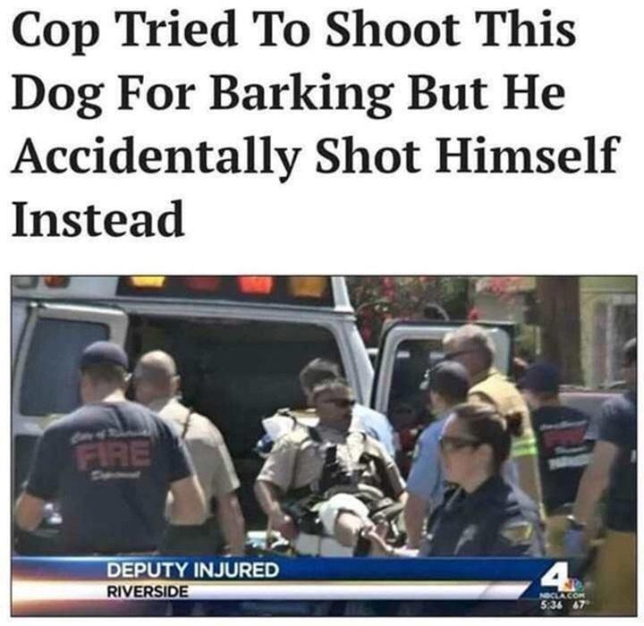 policía se dispara en lugar del perro