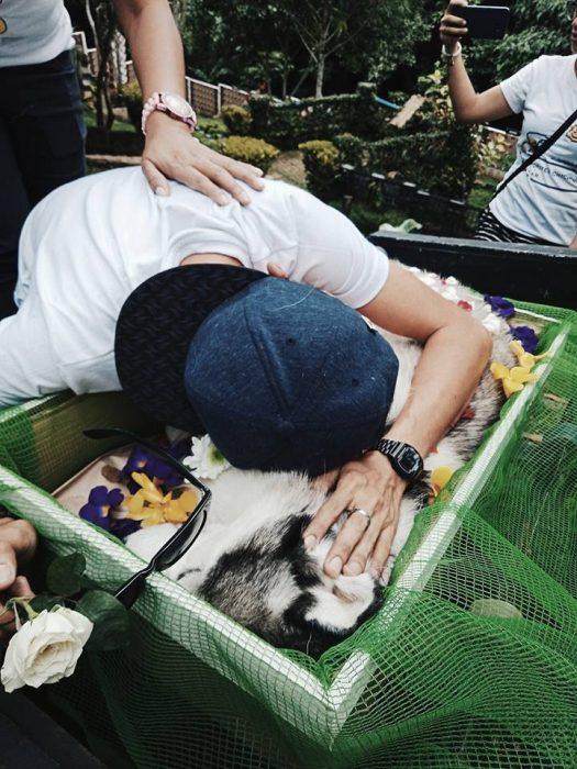 perrito husky muere