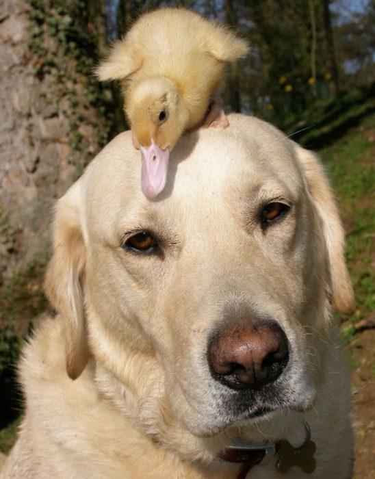 inusuales amistades entre los animales