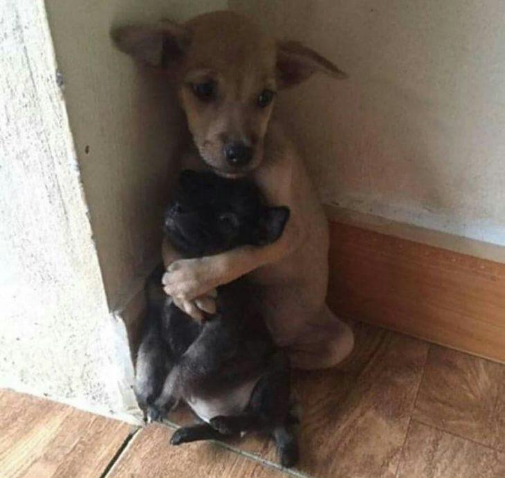 inusuales amistades entres los animales