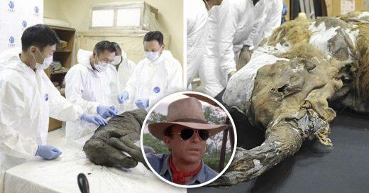Cover Rusia planea revivir especies extintas al estilo Jurassic Park