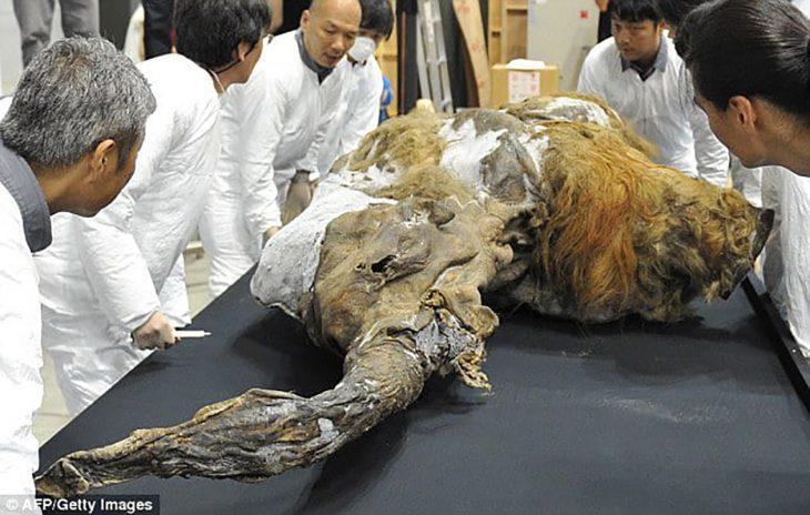 científicos alrededor de un mamut