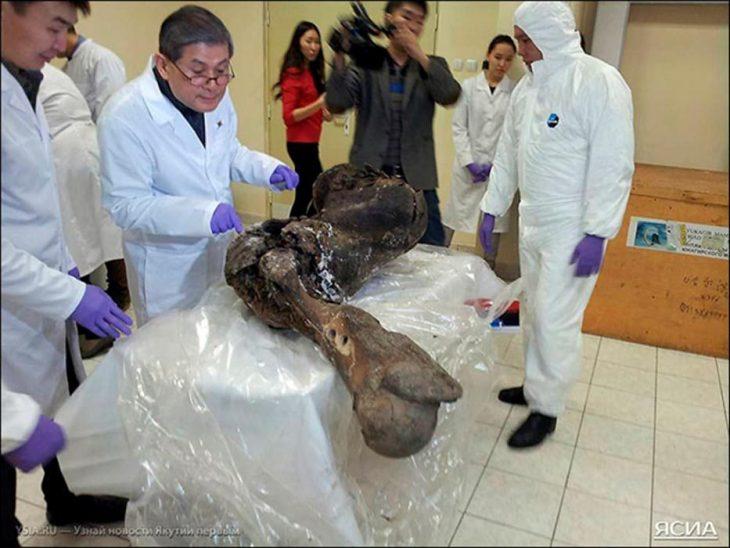 científicos viendo a un mamut