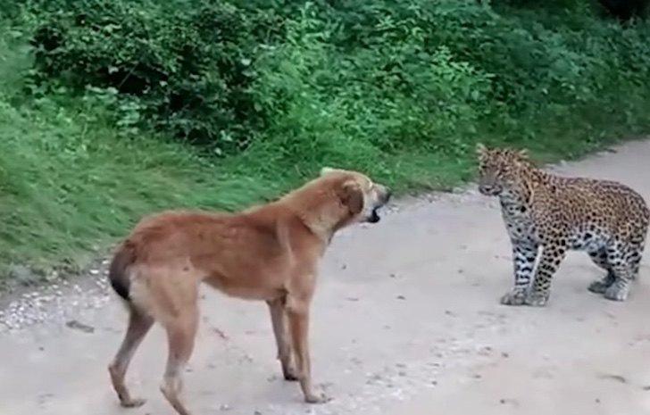 perro enfrenta felino