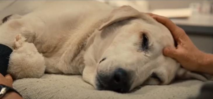 lo que hacen los perritos antes de morir