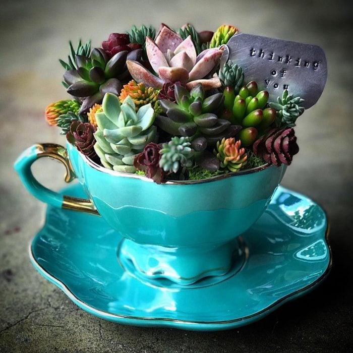 maceta muy elegante en una tacita de té