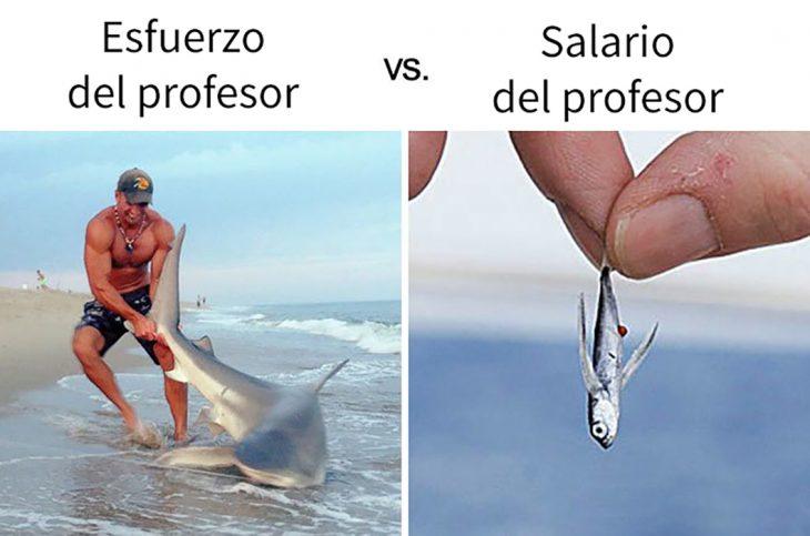 meme salario tiburón