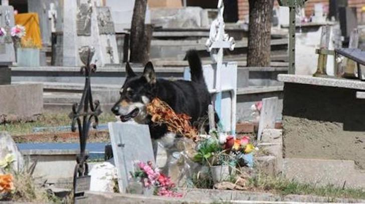 murió cuidando la tumba de su dueño