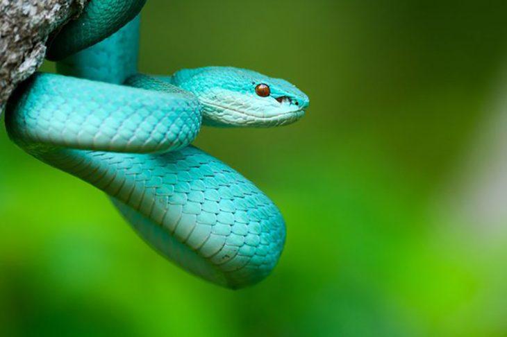 Serpiente de un color peculiar