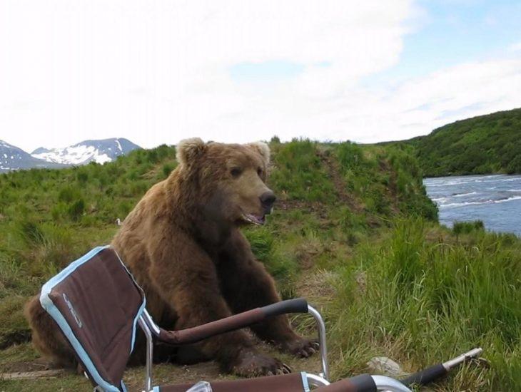 oso contempla el paisaje junto a fotógrafo