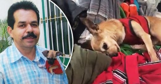 Cover Perrito tiene la reacción más conmovedora al sentir el olor de su difunto dueño en la ropa