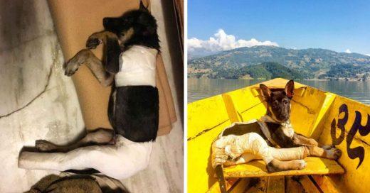 Cover Turista encuentra a un perrito gravemente herido y se lo lleva a viajar por el mundo