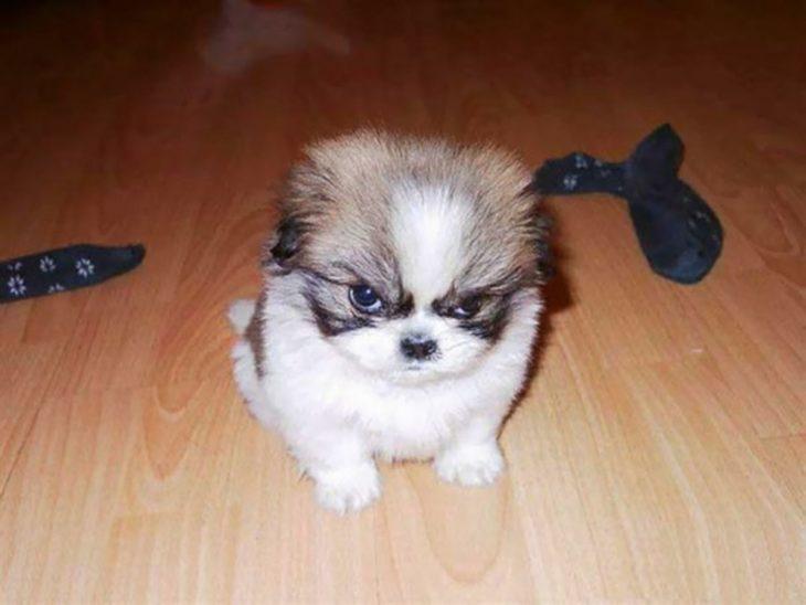 perritos enojados