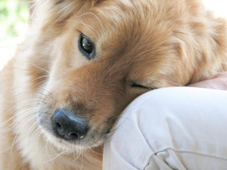perritos super lindos