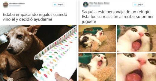 Cover Tuits que demuestran que la vida con animales es mejor