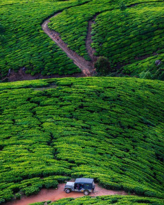 Plantaciones de té, India