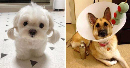 Cover Fotografías Que Los Amantes De Los Perros Necesitan Ver Lo Más Pronto Posible