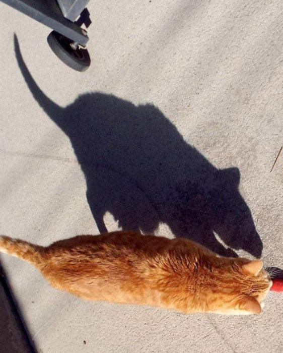 sombras extrañas recreoviral.com