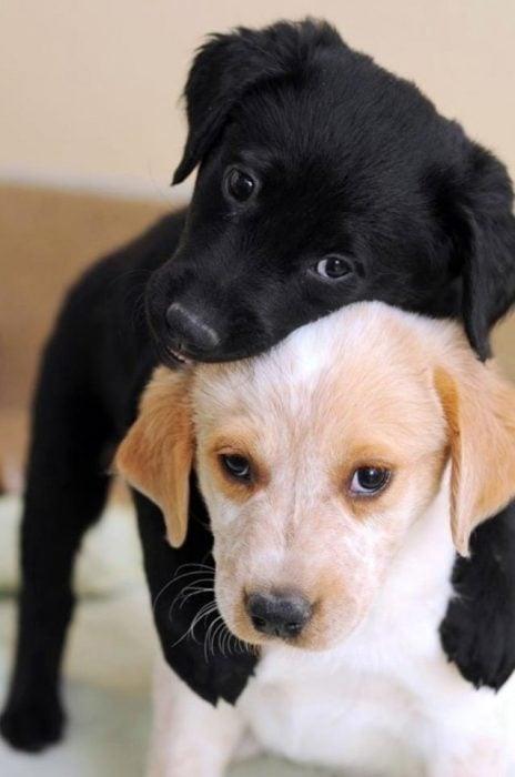 perritos amigos