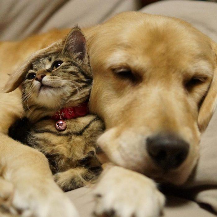 perro y gato mejores amigos