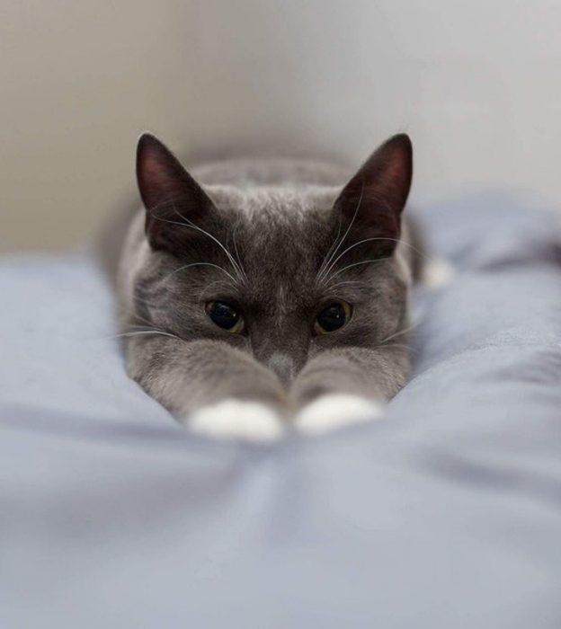 gatito estirandose