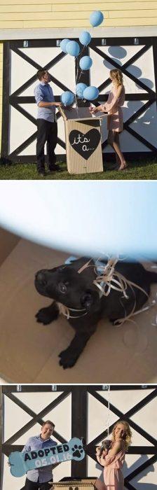 revelación de género perrito