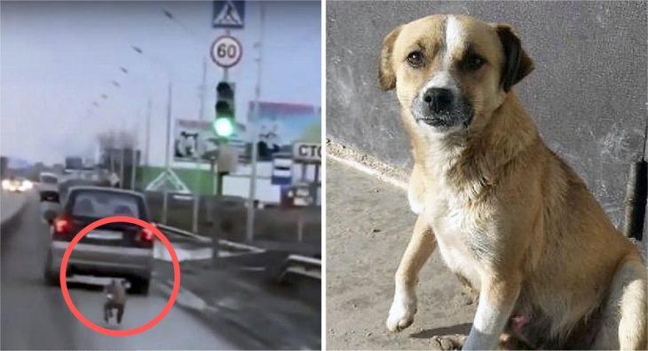 dinka perrito abandonado