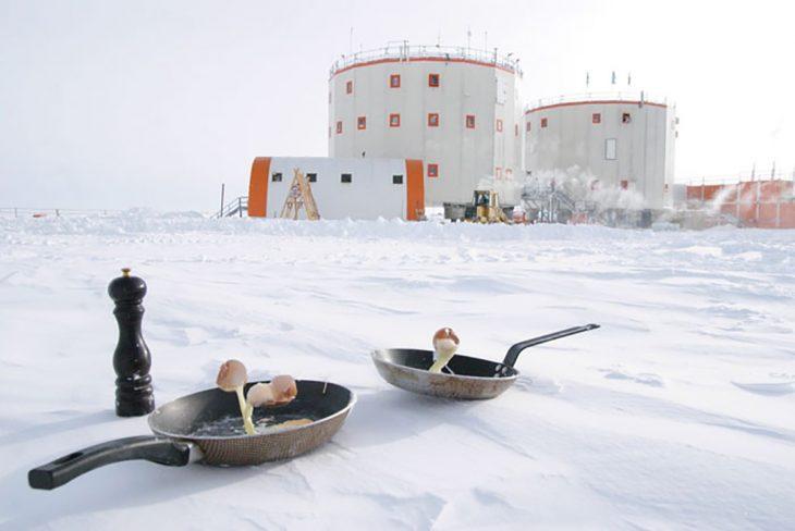 huevos en la antártida