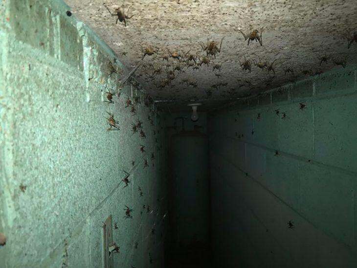 arañas en casa