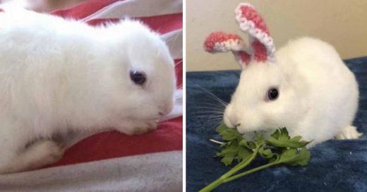 Cover Conejita nace sin orejas y su nueva familia le teje unas con estambre