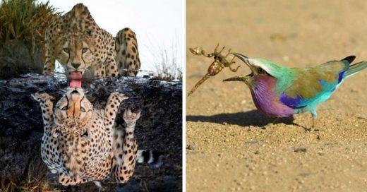 Cover Fotos vida salvaje impresionantes