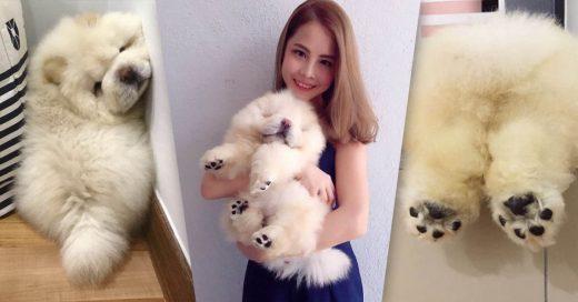 Cover Este cachorro está conquistando Internet con las fotos de sus patitas demasiado adorables