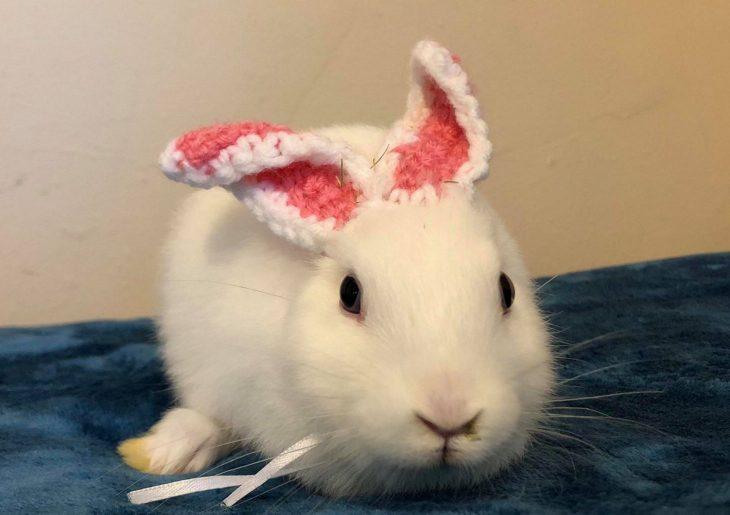 conejo orejas falsas