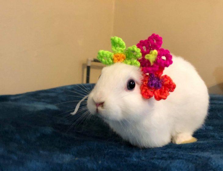 conejo orejas