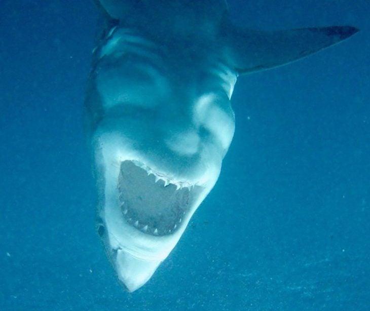 tiburón al revés