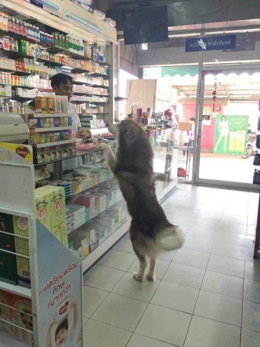 El supermercado es un universo bizzarro