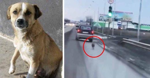 Cover Cover Abandona a su perrito en plena carretera y corre detrás de su auto