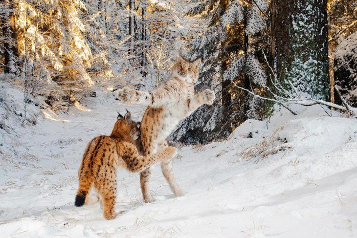 fotografías mundo salvaje